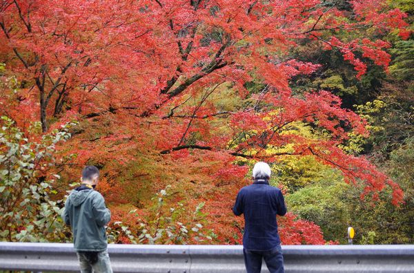 木の香界隈3