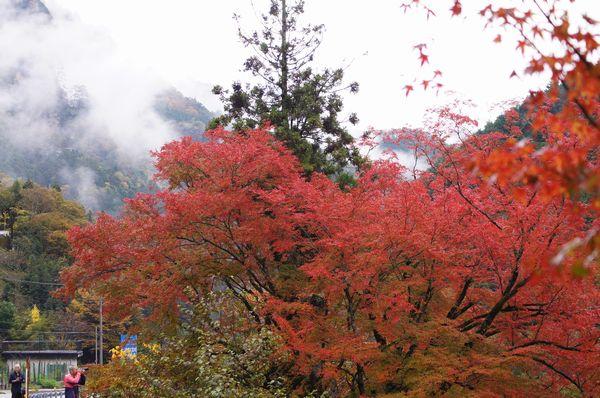 木の香界隈4