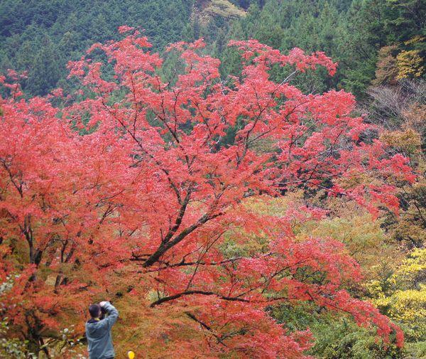 木の香界隈5
