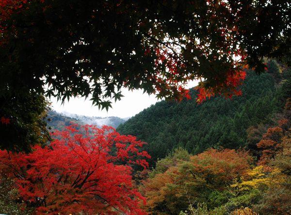 木の香界隈10