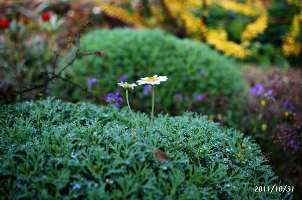 身近な花たち 1