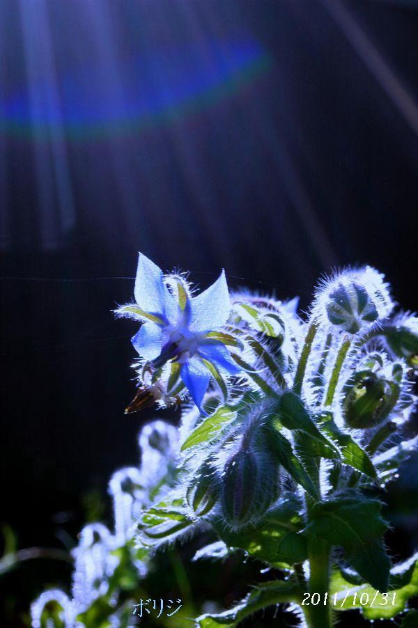 身近な花たちN 029