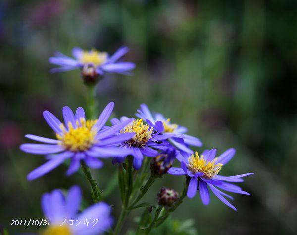 身近な花たちS 035