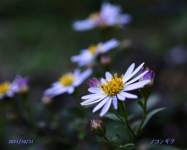 身近な花たちS 038