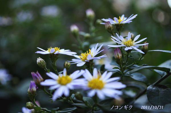 身近な花たちS 036