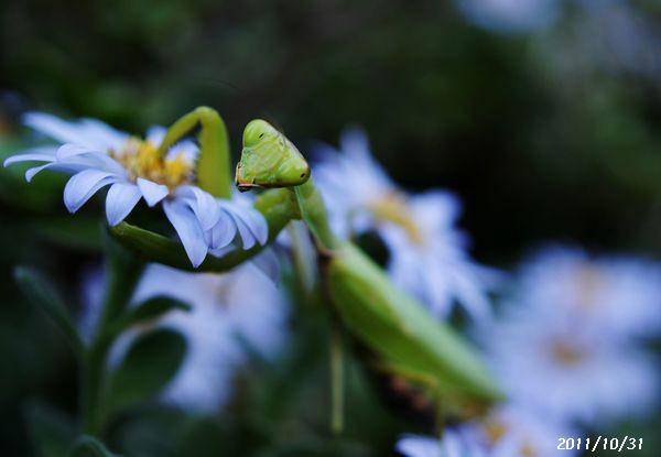 身近な花たちS 7