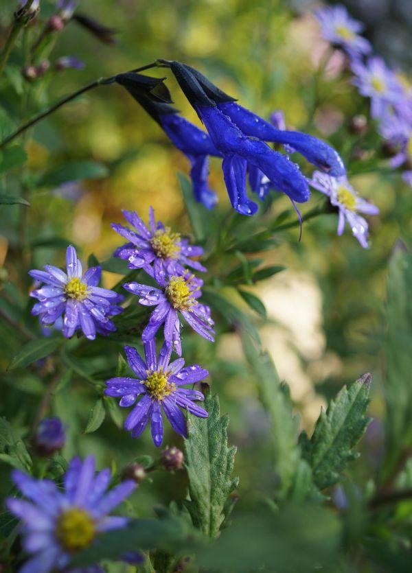 身近な花たち 093