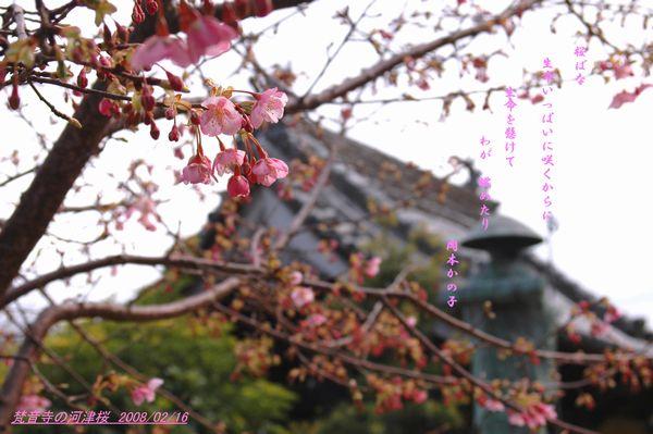 桜花命一杯