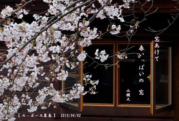 窓一杯の桜
