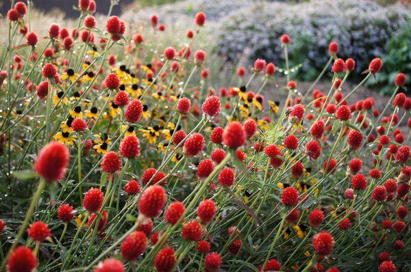 身近な花たち 051
