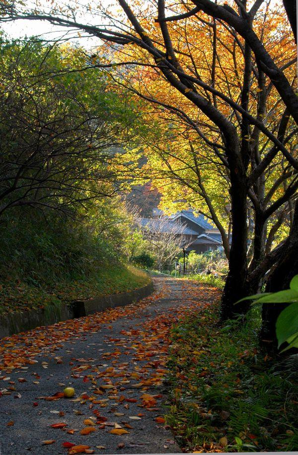 京の浜の秋