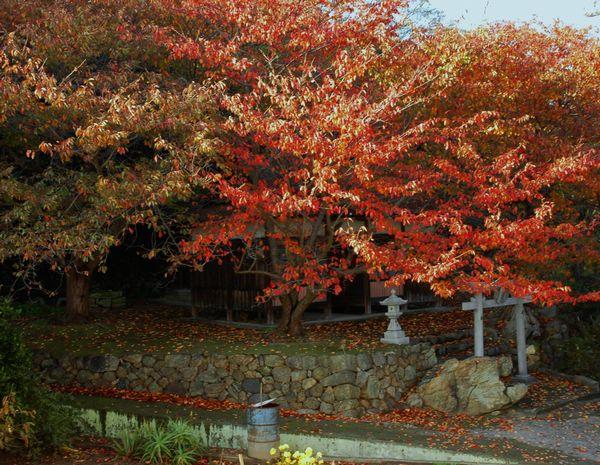 滝の宮の秋1