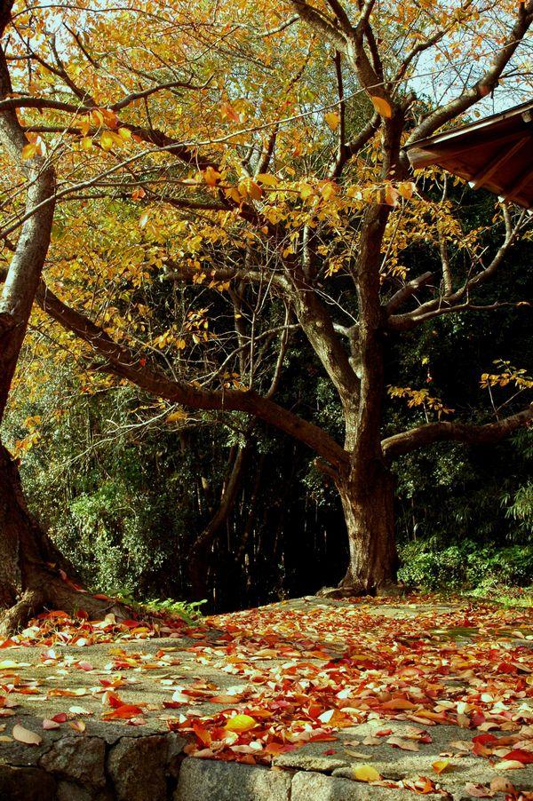 滝の宮の秋