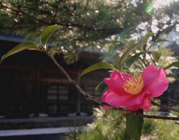 2011,12,15鎌倉s 098