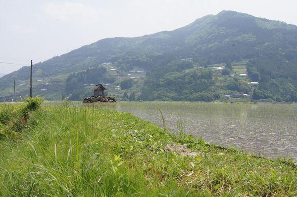 高知県八畝棚田 2-5