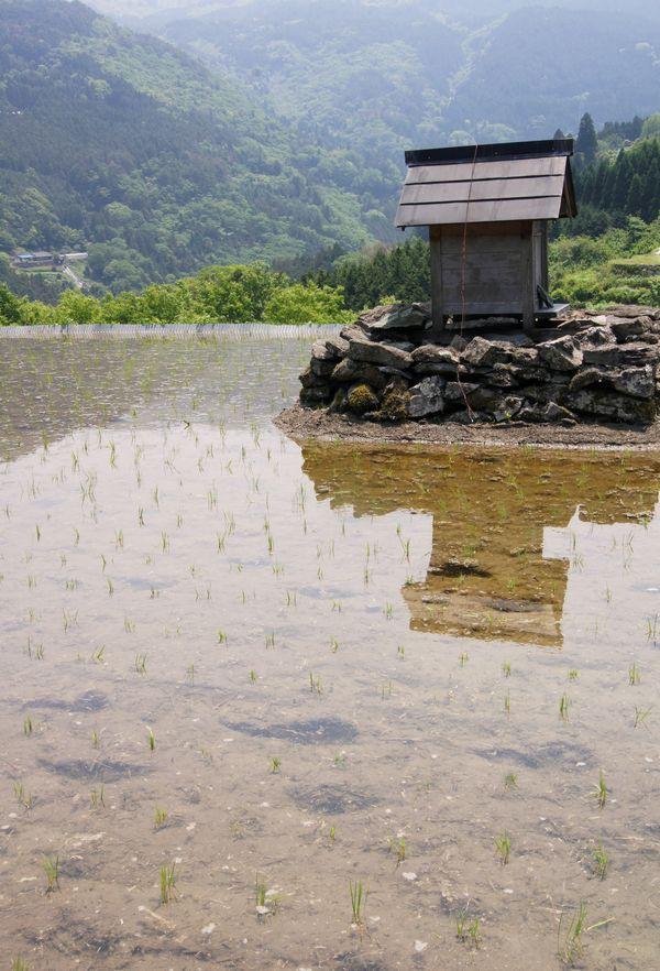 高知県八畝棚田 29