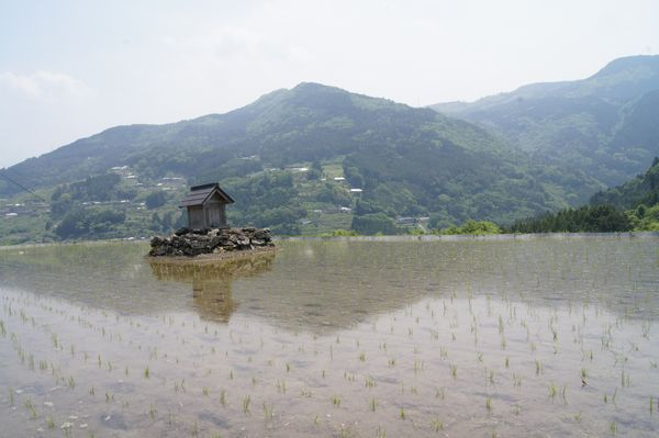 高知県八畝棚田