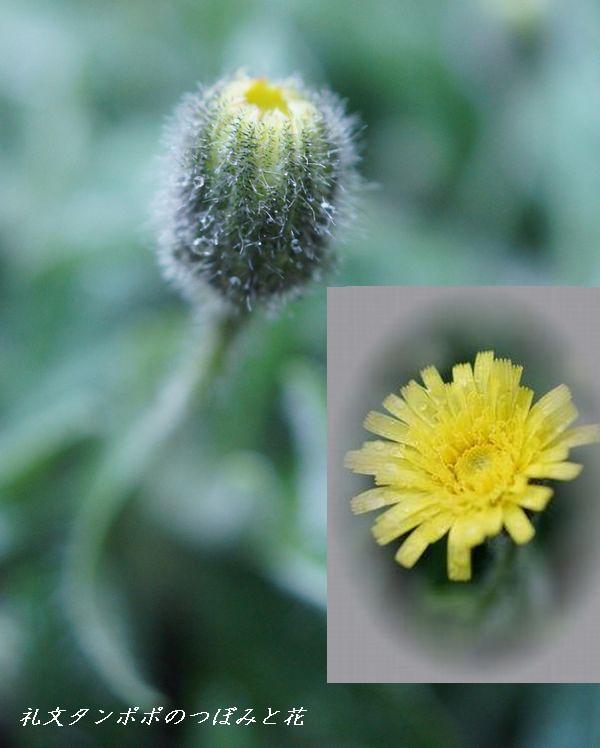 5,10S庭の花 135