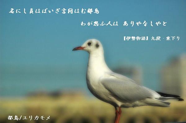 003 (600x399) - コピー
