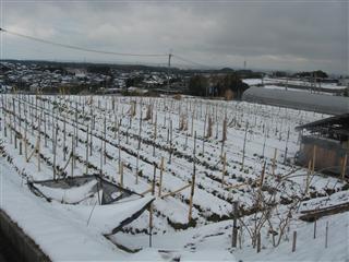 雪11_R