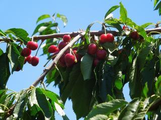Cherrypicking