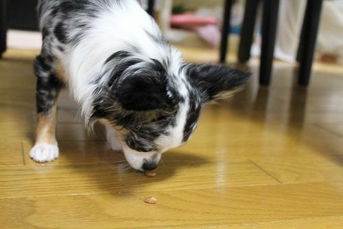 納豆 (7)
