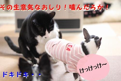 パークVSぽて (7)