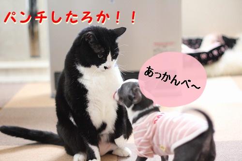 パークVSぽて (8)