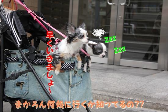 ドッグカフェへGO~ (3)