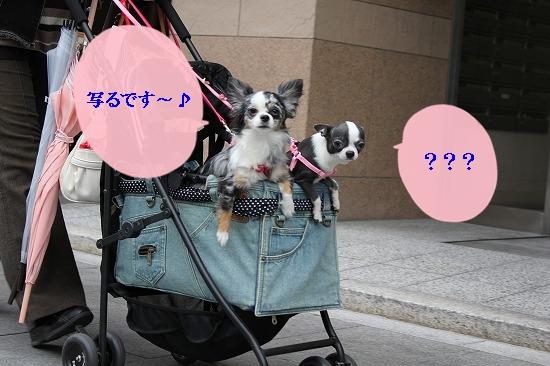 ドッグカフェへGO~ (2)