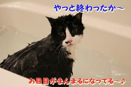 お風呂 ♪ (45)