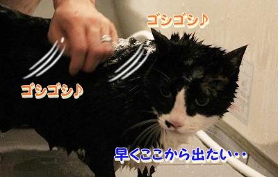 お風呂 ♪ (33)