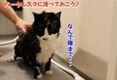 お風呂 ♪ (30)