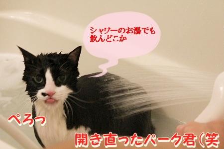 お風呂 ♪ (54)