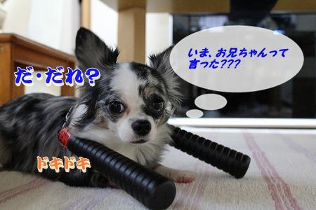戦うまかろん♪  (11)