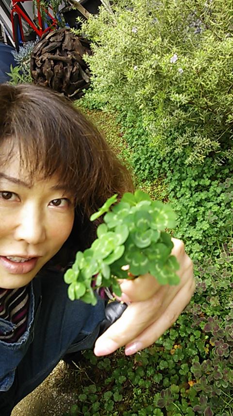 moblog_681d515c.jpg