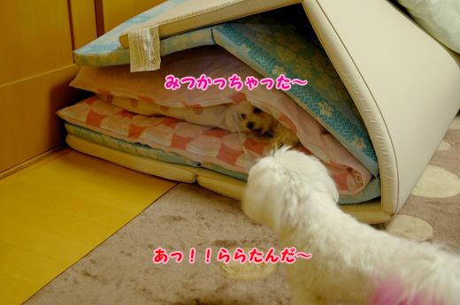 20100530D-010.jpg