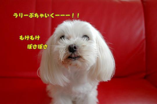 20100620D-059.jpg