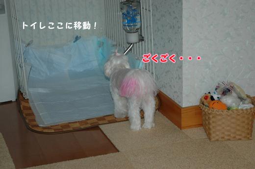 20100620D-099.jpg