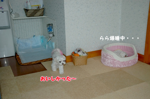 20100620D-100.jpg