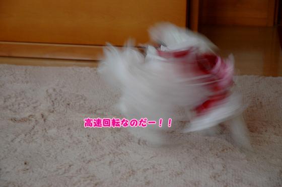 20101011D-112.jpg