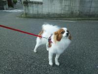 715sakura_convert_20110716110015.jpg