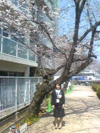 sakura_20110401214543.jpg