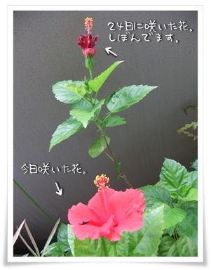 20100927-04.jpg