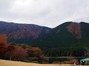 tanukiko-20141116-09s.jpg