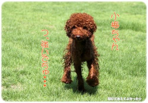 305_20110824205611.jpg
