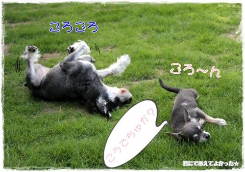 335_20110905193548.jpg