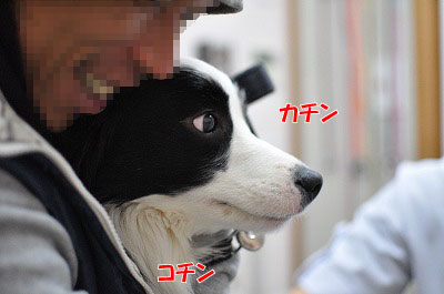 201102-waku1.jpg