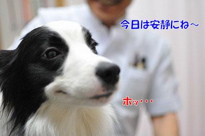 201102-waku4.jpg