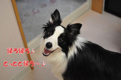 201102-waku5.jpg